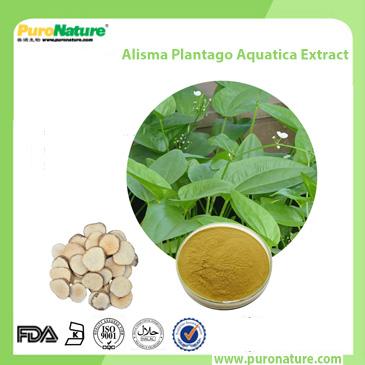 Alisma Plantago Aquatica Extract 26575-95-1
