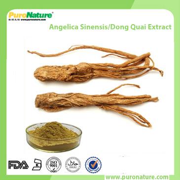 Angelica Sinensis Dong Quai Extract 4431-01-0 Ligustilides