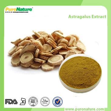 Astragalus Membranaceus Bay Chi Extract 83207-58-3 polysaccharide