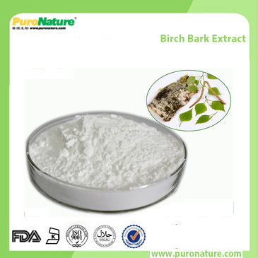Birch Bark Extract 472-15-1 Betulin