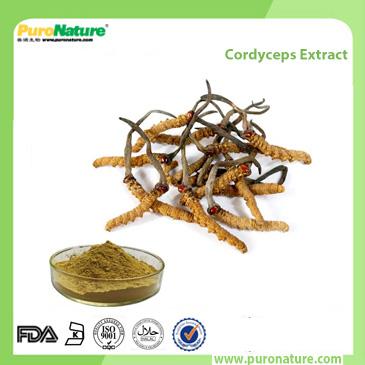 Cordyceps Extract 73-03-0 Cordyceptic Acid