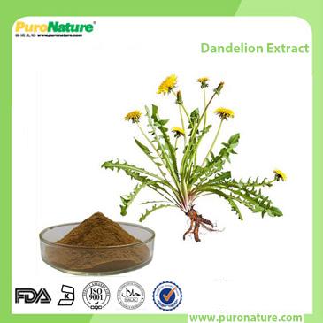 Dandelion Extract 68990-74-9 Flavonoids