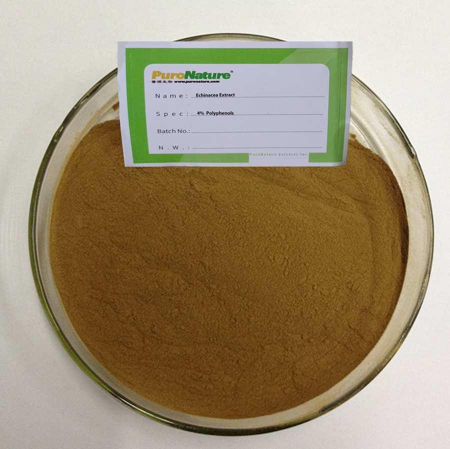Echinacea Extract Powder 4% Polyphenols