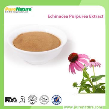 Echinacea purpurea extract 70831-56-0 Phenolic Compounds