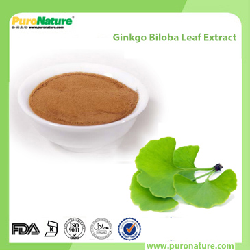 Ginkgo Biloba Leaf Extract 117-39-5 Flavone Glycosides