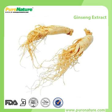 Ginseng Extract Ginsenosides
