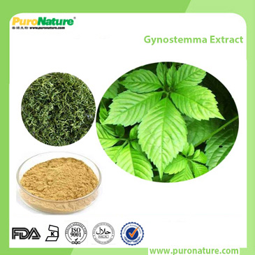 Gynostemma extract 98% Gypenosides