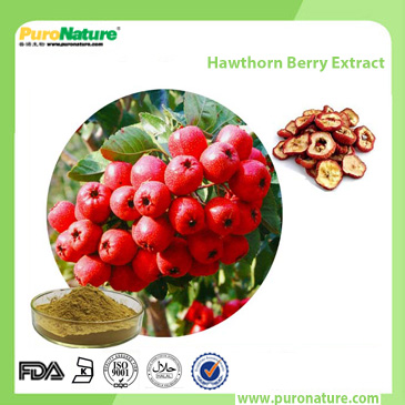 Hawthorn Berry Extract 3681-93-4 vitexin