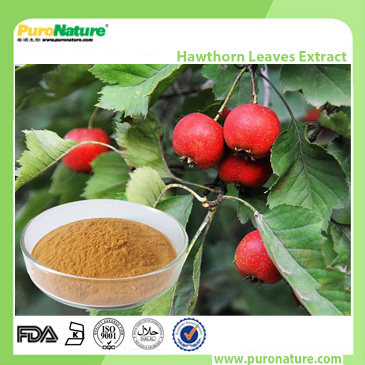 Hawthorn Leaves Extract Flavones