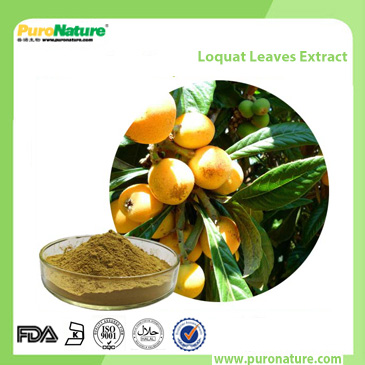 Loquat Leaves Extract 77-52-1
