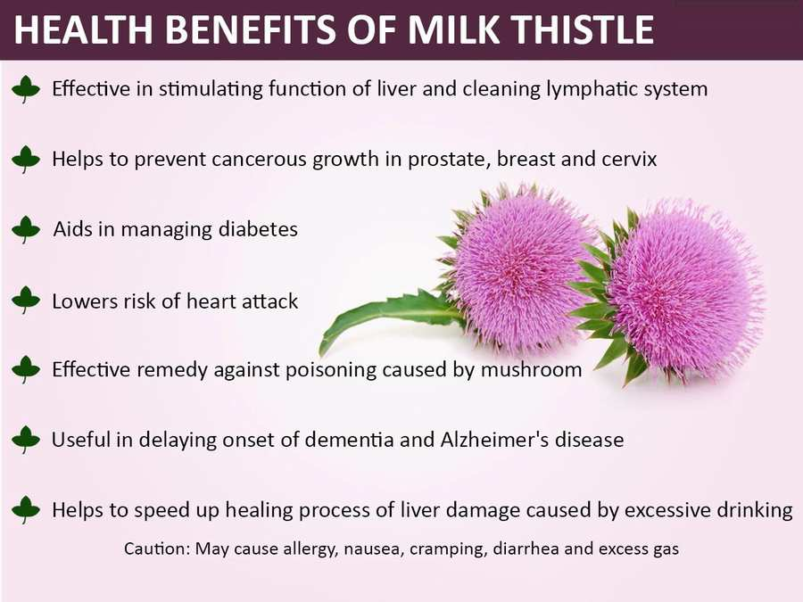 Milk Thistle Extract Function benefit