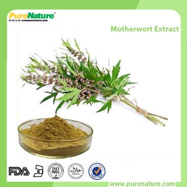 Motherwort Extract Leonurus heterophyllus Sweet