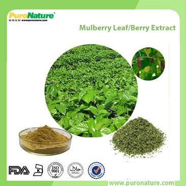 Mulberry Leaf Berry Extract 19130-96-2 Deoxynojirimycin
