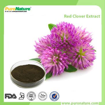 Red clover extract Trifolium pratense