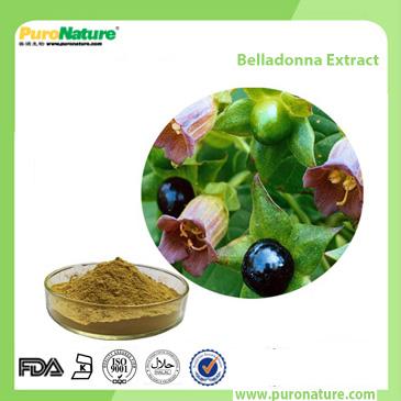 Belladonna Extract 101-31-5 scopolamine atropine