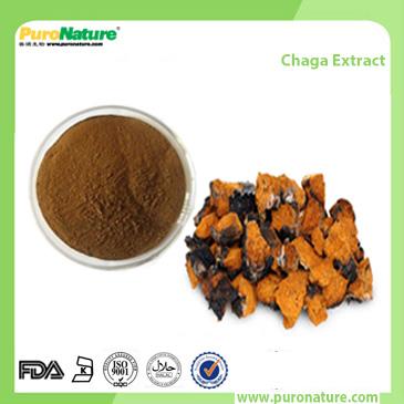 Chaga Extract Inonotus Obliquus Triterpene