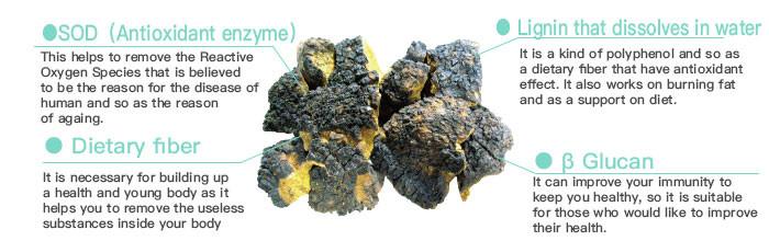 Chaga mushroom extract Inonotue Obliquus