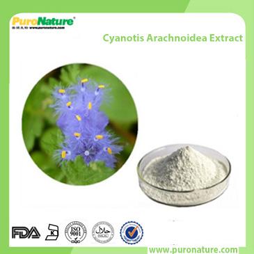 Cyanotis Arachnoidea Extract 5289-74-7 Ecdysterone
