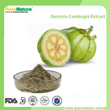 Garcinia Cambogia Extract 6205-14-7 Hydroxycitric Acid HCA