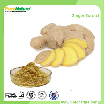 Ginger Extract 23513-14-6 Gingerols