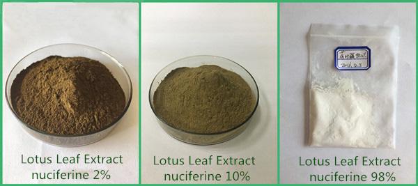 Lotus Leaf Extract Powder active ingredient 98% Nuciferine Folium Nelumbinis cas 475-83-2