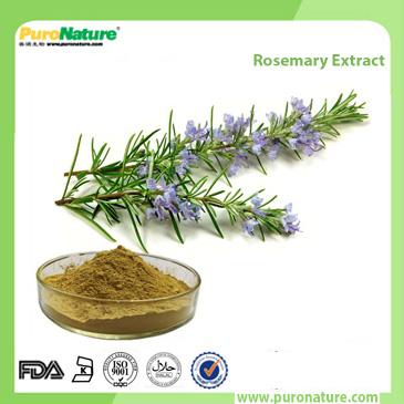 Rosemary Extract 20283-92-5 Rosmarinic Acid