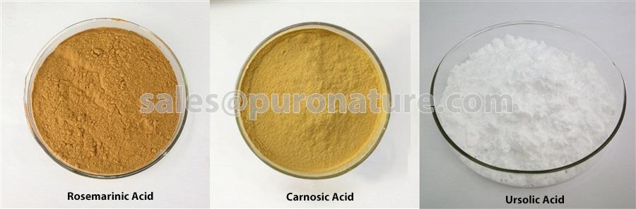 Rosemary-Extract-Rosmarinic-Acid, Ursolic-Acid-and-Carnosic-Acid