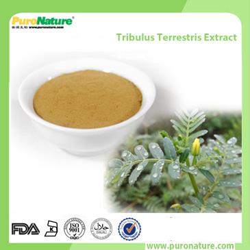 Tribulus Terrestris Extract 90131-68-3 Protodioscin