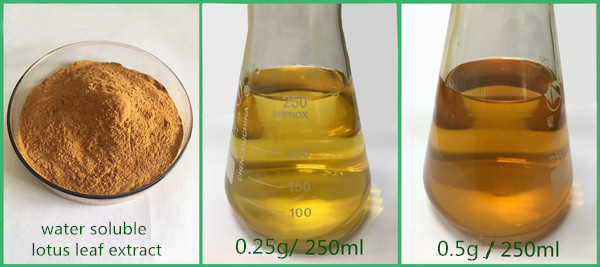 Lotus Leaf Extract Powder 98% Nuciferine cas 475-83-2 ISO Certificated plant extracts China manufacturer