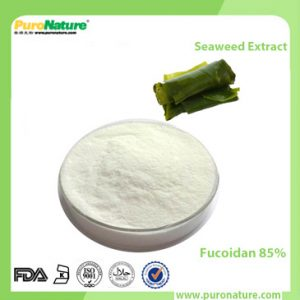 Seaweed Extract Fucoidan 85%