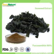Seaweed Extract Fucoxanthin 90%