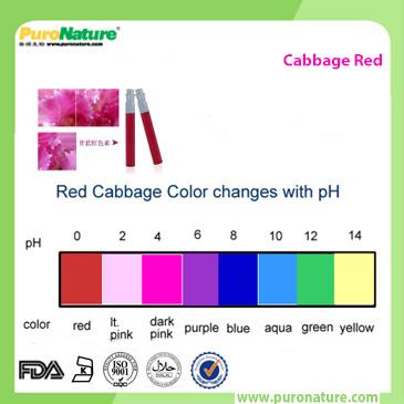 organic cabbage Juice Powder