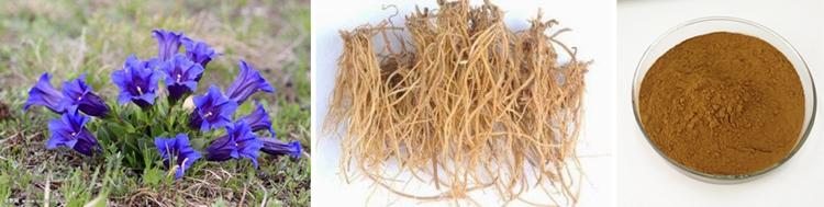 Gentain Extract Gentiopicrin cas 20831-76-9 Gentiana lutea organic herbal extract powder capsules