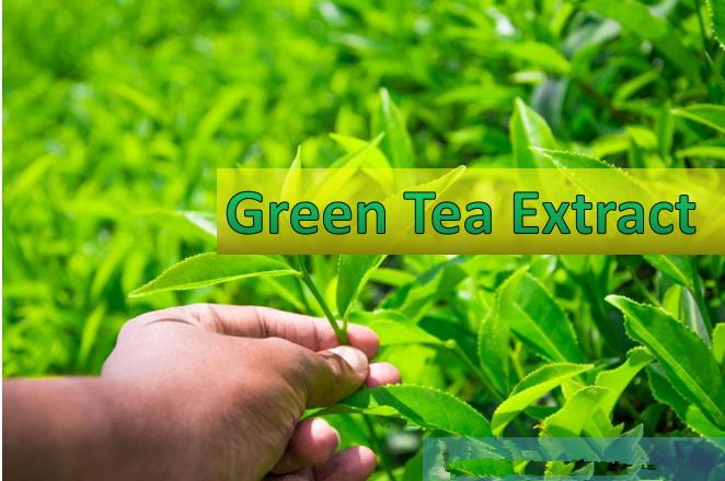 Green tea extract powder Polyphenol, EGCG (epigallocatechin gallate), Catechins, Caffeine, antioxidant cas 84650-60-2, 989-51-5