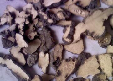 Polyporus Umbellatus Extract With 30% polysaccharides