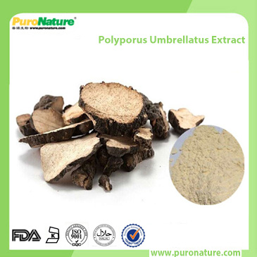 Polyporus Umbrellatus Extract with 40% Polysaccharides