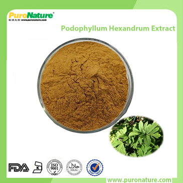 Podophyllum Hexandrum Extract podophyllin