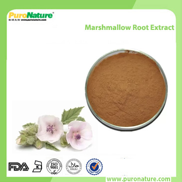 Marshmallow Root Extract Althaea root powder